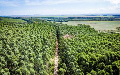CMPC é certificada novamente pela Forest Stewardship Council e o Programa Brasileiro de Certificação Florestal