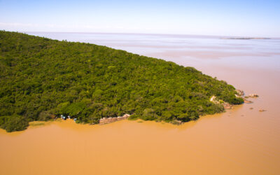 CMPC reforça seu compromisso com a restauração de ecossistemas brasileiros e celebra metas de sustentabilidade