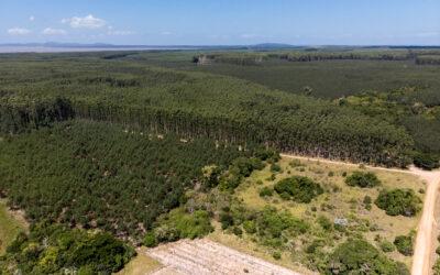 Comunidade chilena de Marileo planta 800 árvores nativas para proteger suas fontes de água na região da La Araucanía